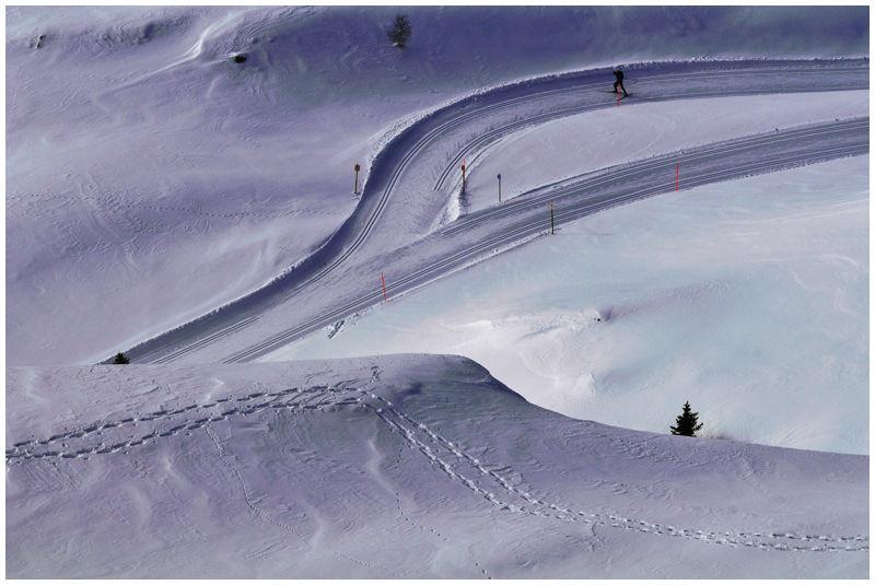 Hirondelle des neiges