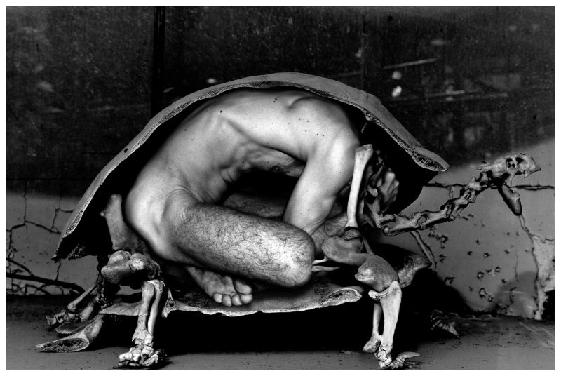 tortue, turtle