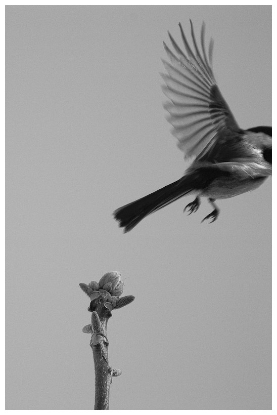 Unconventional crop of a bird flying away