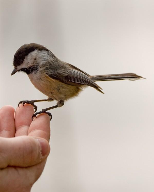 Small bird lands on hand