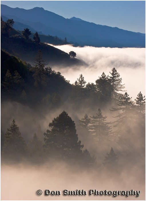 Fog and Monterey pines along Big Sur coast