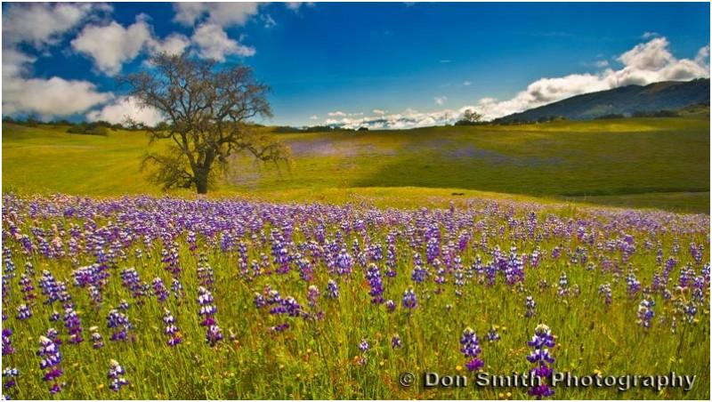 A spring morning near Monterey Bay