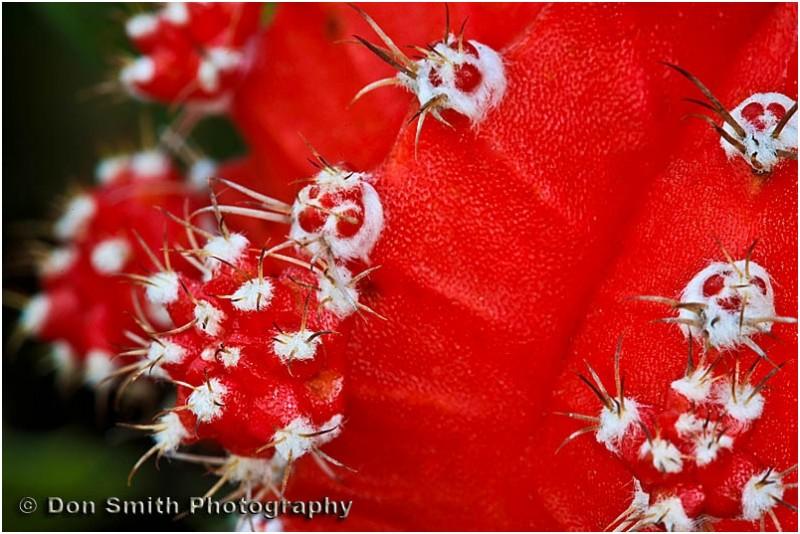 A hybid produced cacti