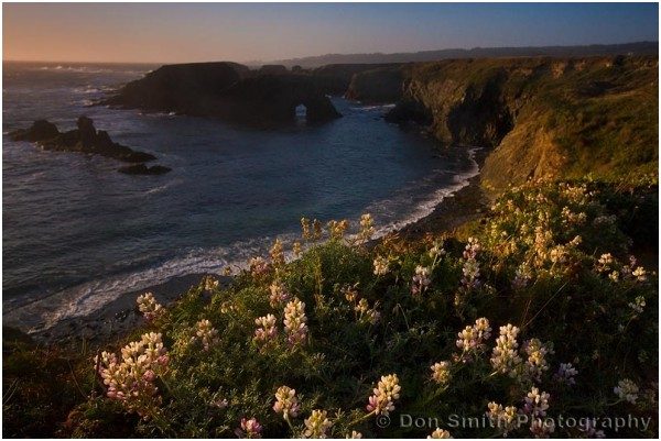 Sunset along Mendocino Headlands