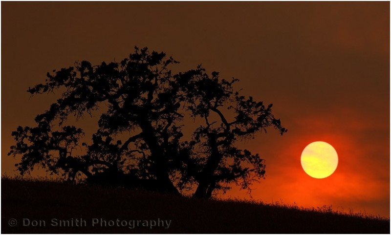 A setting sun and a California oak.
