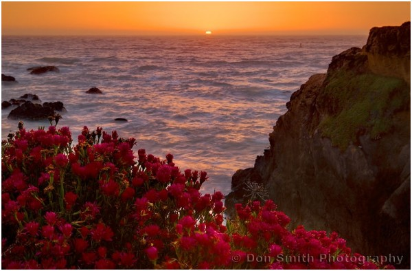 Wildflowers at sunset at Mendocino