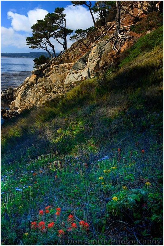 Summer wildflowers at Point Lobos State Reserve