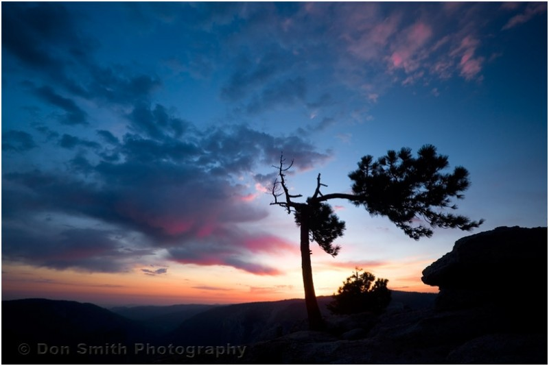Jeffrey pine and sunset from Sentinel Dome