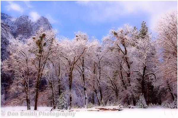 Yosemite Winter Dreamscape