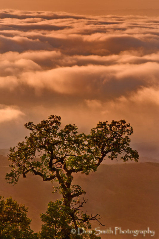 Sunset Lit Tree and Fogbank