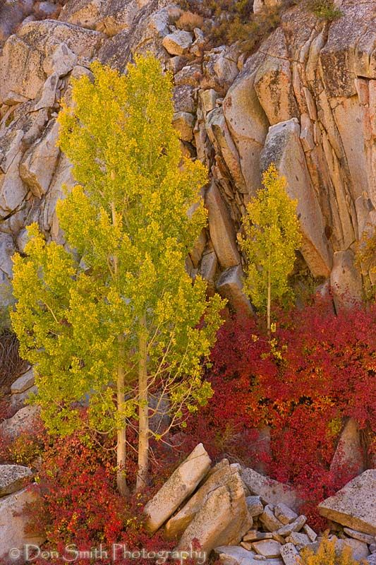 Aspens Against Granite