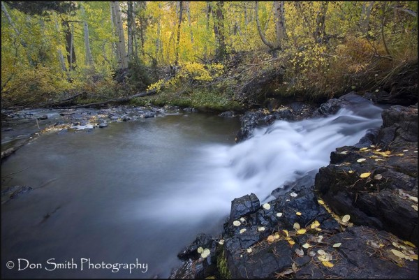Mill Creek in Lundy Canyon