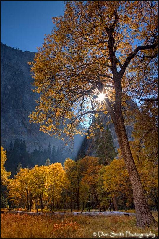 Sunstar through Black Oak