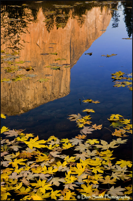 El Capitan and Fall Leaves
