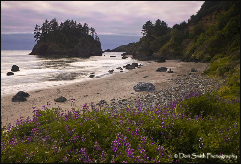 Pewetole Island and lupine at Trinidad State Beach