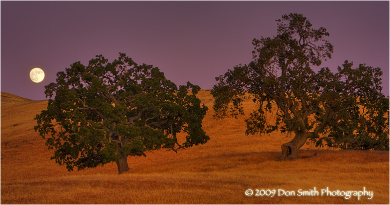 Full moon over California oaks.