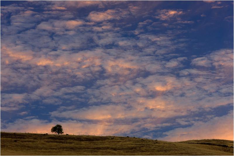 Oak and clouds at first light along coastal hills