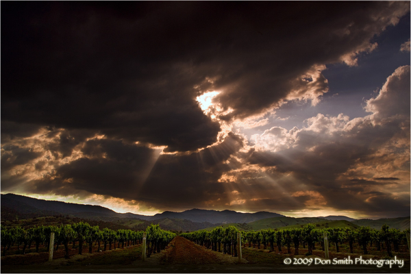 God beams over a vineyard in Cienega Valley