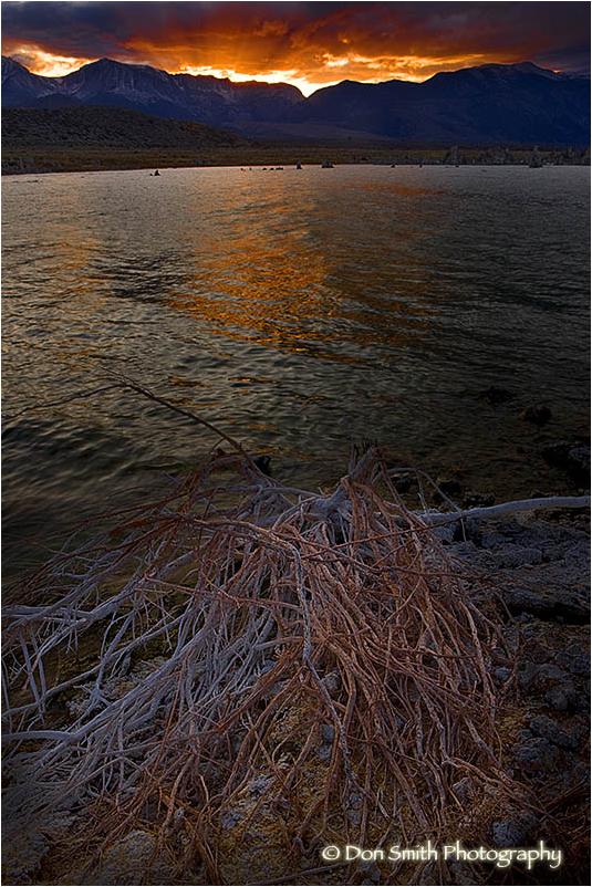 An alkali-covered snag along shore of Mono Lake.