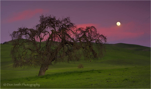 Full moon rises over rolling green hills.
