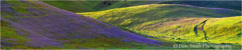 Spring wildflowers in Little Panoche Valley
