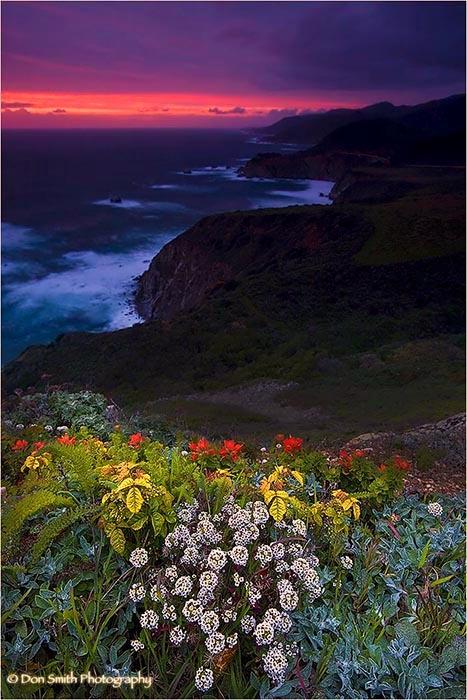 Spring wildflowers at dusk along Big Sur coastline