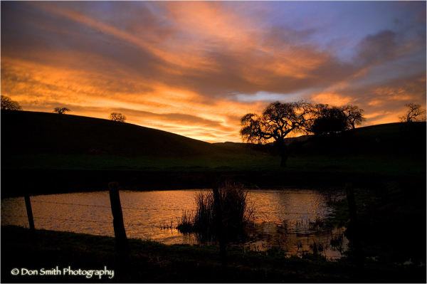 Dawn sky reflecting in a pond.