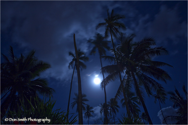 Full moon thorugh coconut trees in Kauai.