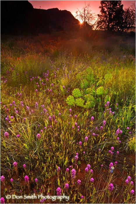Sunrise over desert wildflowers at Bell Rock Park.