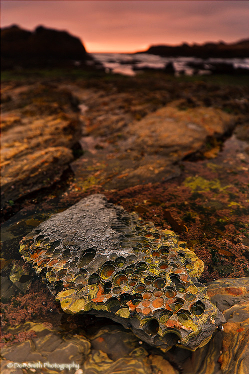 Pt. Lobos State Reserve lichen covered rocks.