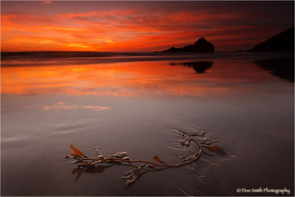 A lone strand of kelp against a dusk sky, Big Sur.