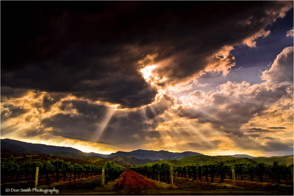 God beams over vineyard in San Benito County, Ca.