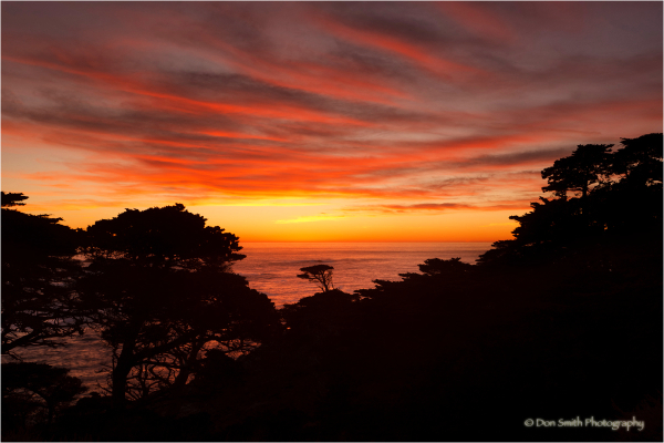 Cypress trees, Point Lobos Reserve, Carmel