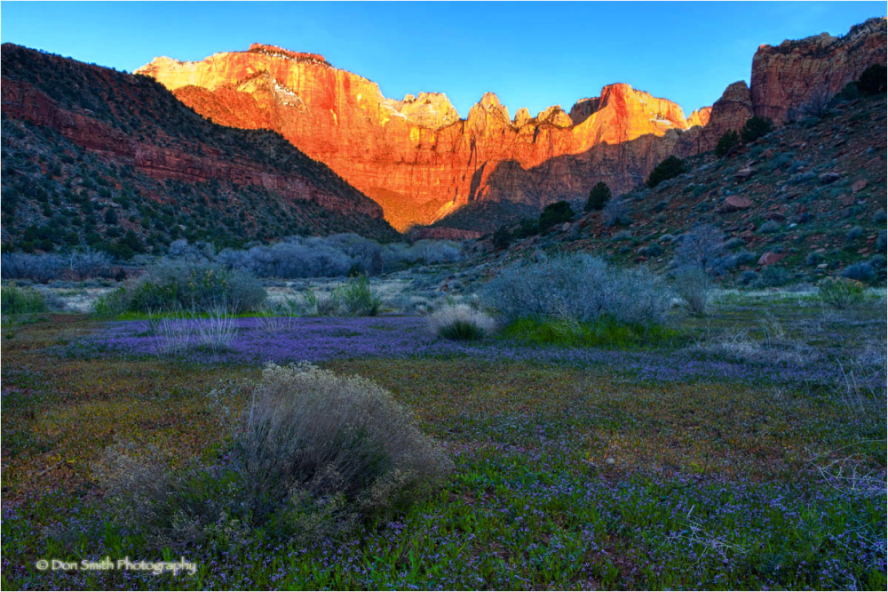 Spring sunrise of Towers of the Virgins, Zion NP.