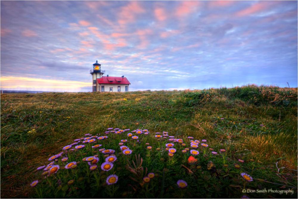 Sea Daises at dawn. Pt. Cabrillo Light Station