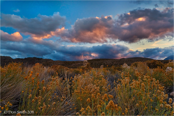 Flowering Rabbit Brush and cloudy sunset sky.