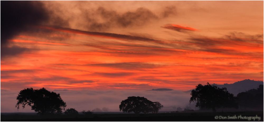 Oaks, fog, and dawn-lit sky, California.