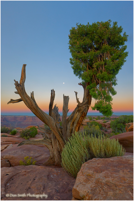 Dawn moonset at Dead Horse Point, Utah