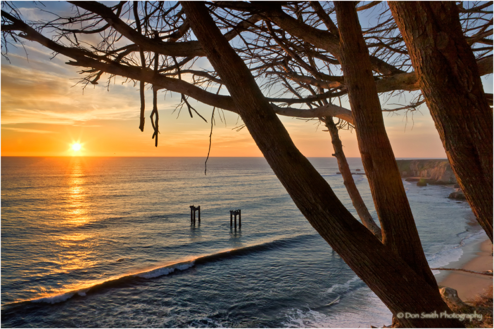 California sunset and Montery Cypress