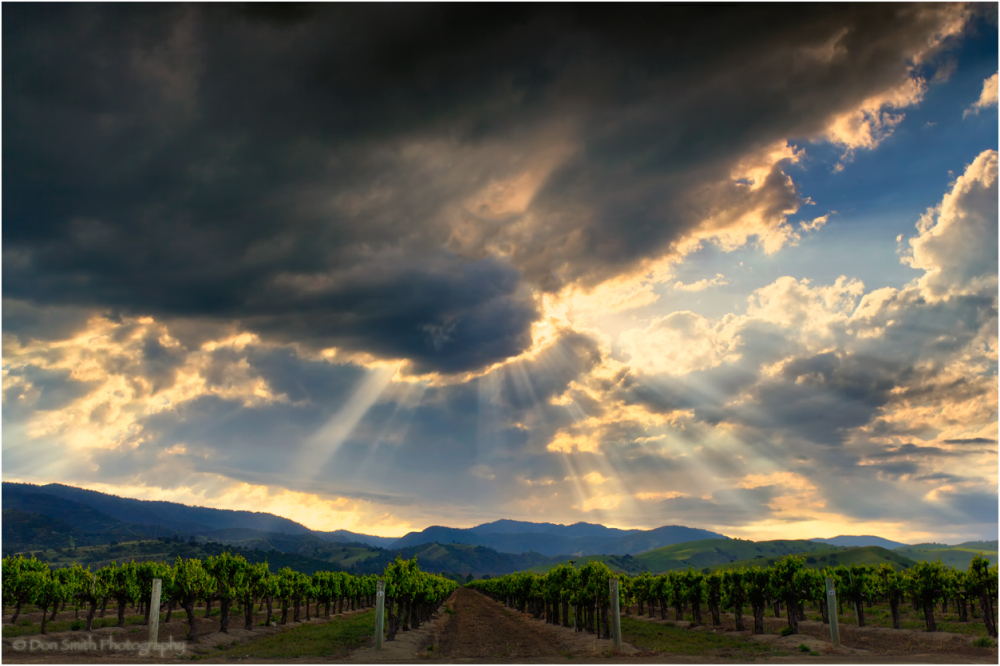 Crepuscular rays over vineyard, central California