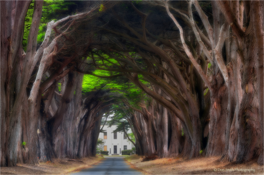 Cypress Tree Tunnel, Point Reyes, CA