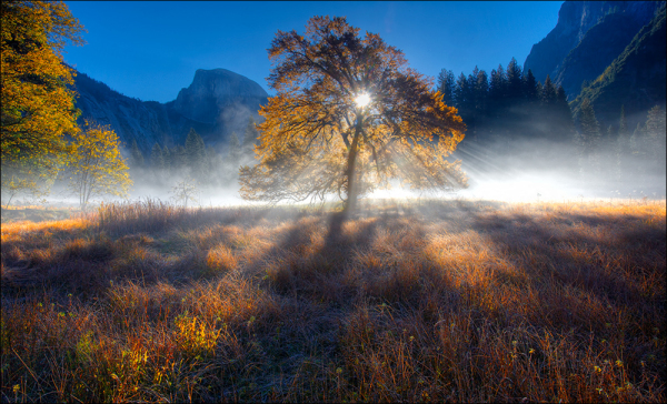 Elm, Cook's Meadow, Yosemite National Park