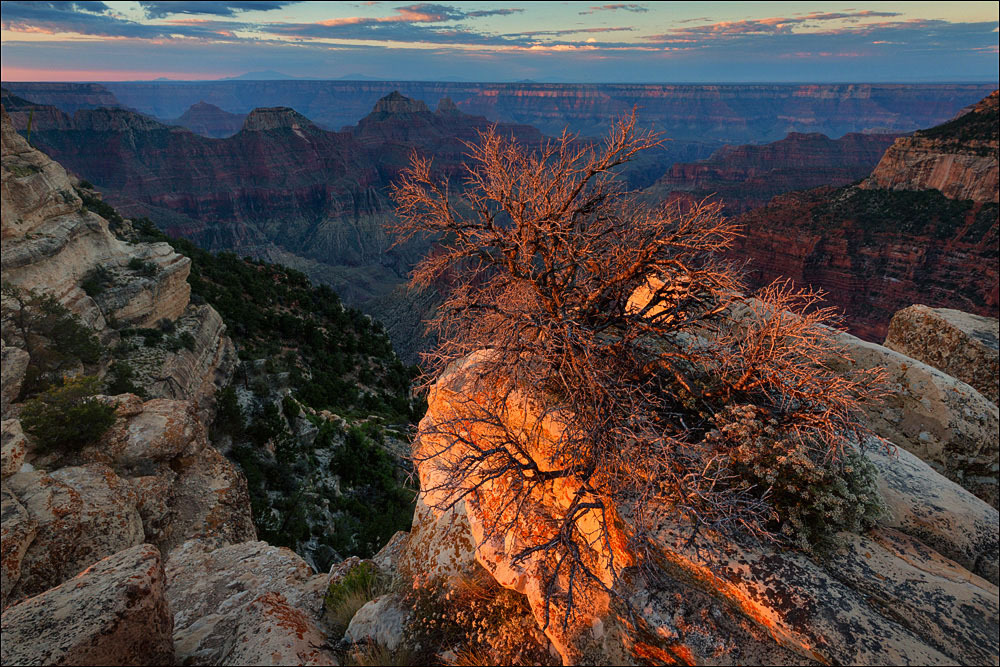 Burning bush, Bright Angel Point, Grand Canyon