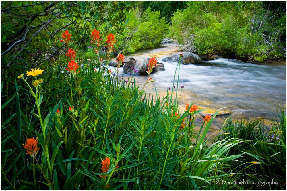 bishop canyon, bishop creek eastern sierra, califo