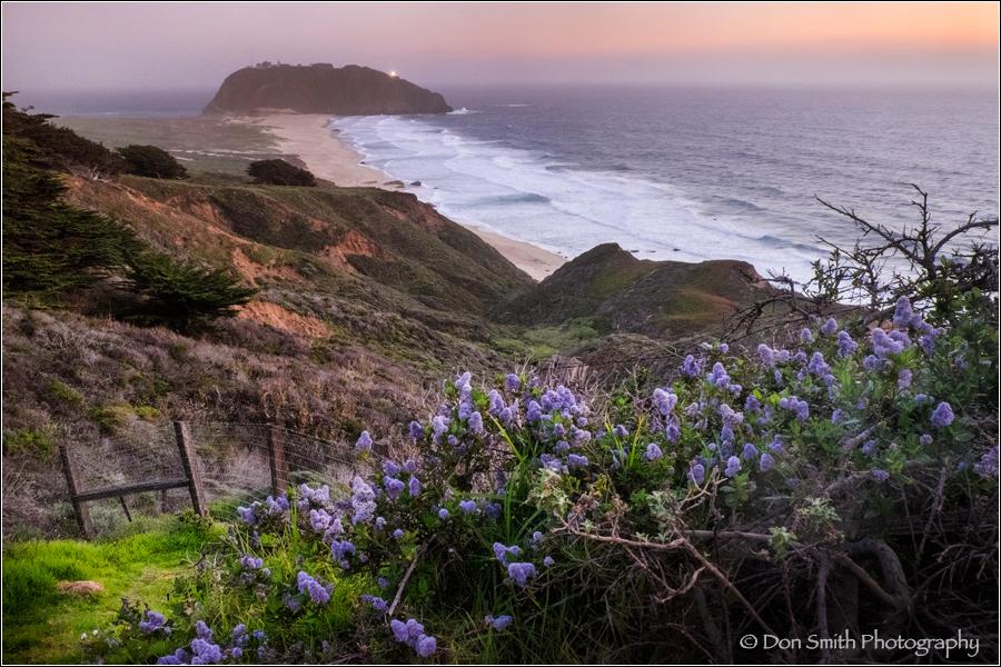 Wild Lilac, Pt. Sur Lightstation, Big Sur Coast