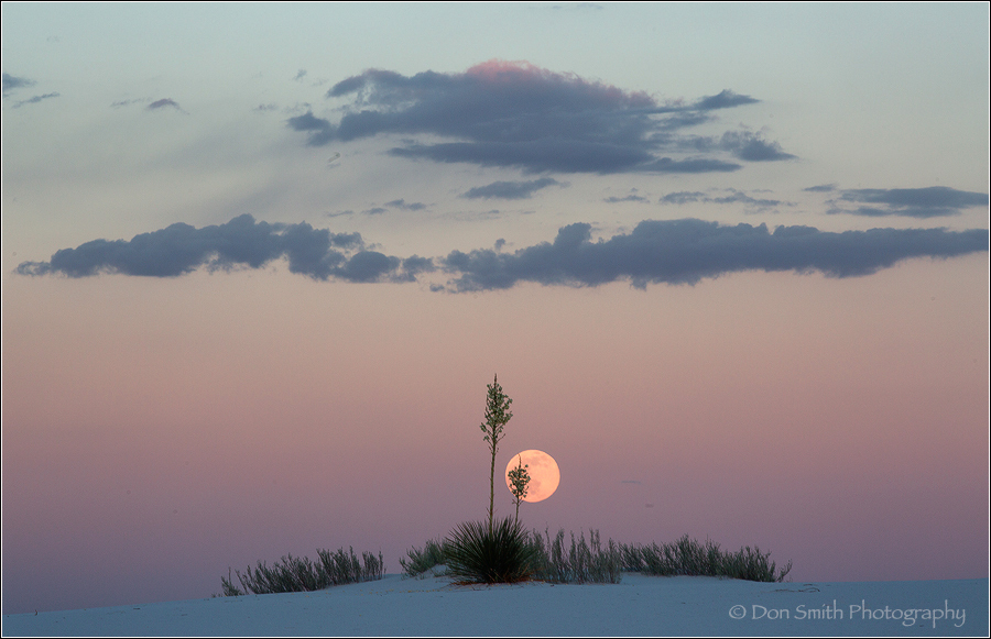 Moonrise and Yucca, White Sands National Monument