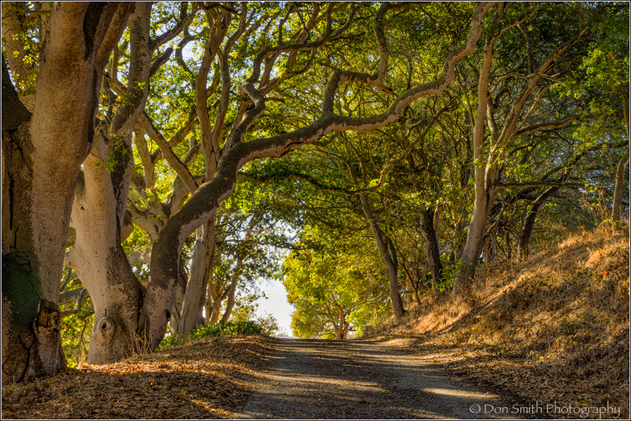 Oak Tree Tunnel, Elkhorn Slough, Sony 70-200mm f/4