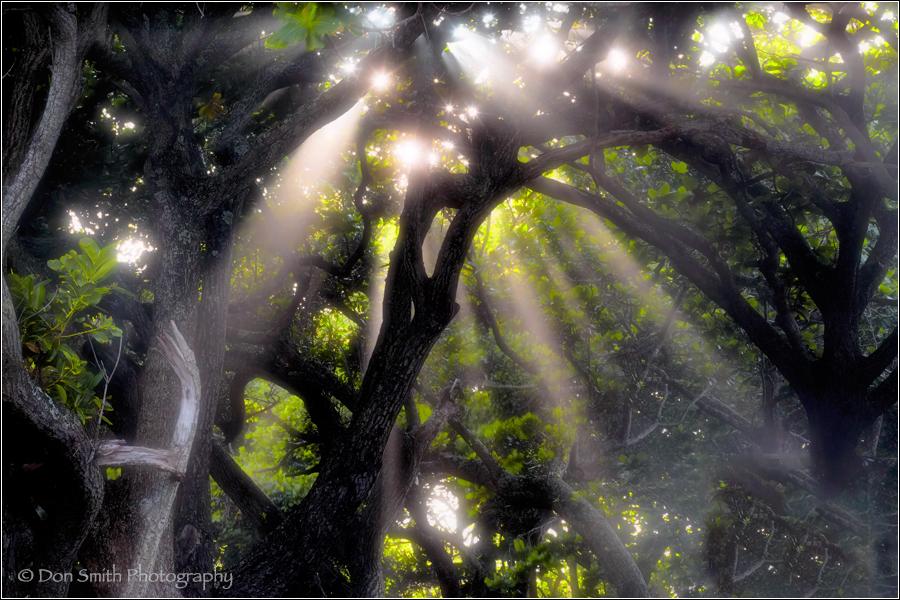 Crepuscular Rays, Hana Coast, Mauai