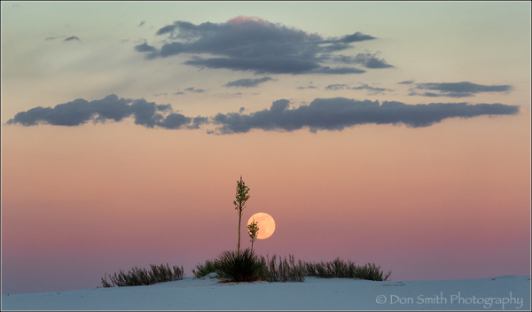 Moonrise Over Yuccas, White Sands NM, New Mexico