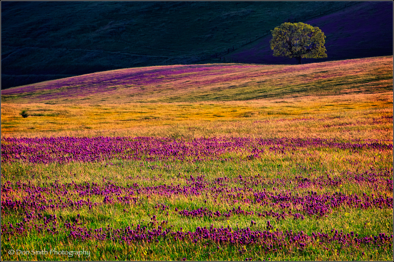 Fields of Clover, Southern Santa Clara Valley